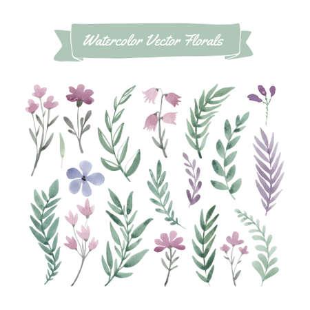 Serie di dipinti a mano acquerello fiori e foglie. Archivio Fotografico - 43070273