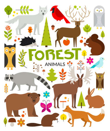 racoon: Set of forest animals made in flat style vector. Zoo cartoon collection for children books and posters. Wolf, reindeer, moose, racoon, fox, bear and other mammals. Each animal isolated and easy to use.