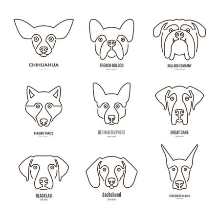 breeder: collection of different dog breeds, including german sheepherd, labrador, doberman, husky. Dog faces. Modern illustration of veterinarian clinic, dog breeder. Illustration