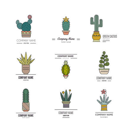 cute graphic: Flat colorful illustration of succulent plants and cactuses in pots. Company corporate element design. botanical graphic set with cute florals. Illustration