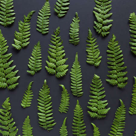Fern leaves on black background - flat lay arrangement.