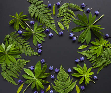 Fern and lupin flowers and leaves - compisitin on black table. Flat lay arrangement.