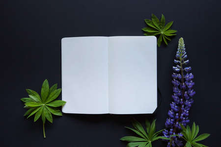 Flat lay minimalistic composition with card and purple lupine flower on black background. Stock Photo