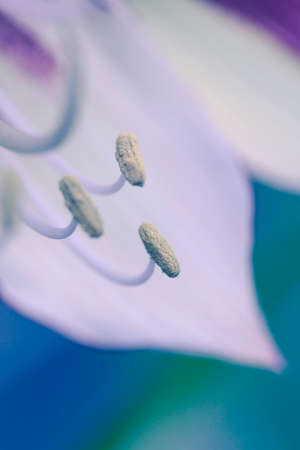 Flower shot with a macro lens. Abstract flower photo with shallow depth of field.