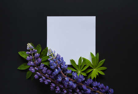 Frame made of leaves and lupinus flowers on black background. Top view floral composition. Flat lay arrangement.