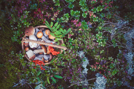 Basket with wild forest mushrooms on natural background