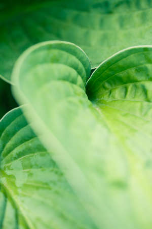 Macro shot of abstract green leaf with shallow depth of field. Abstract natural photo.