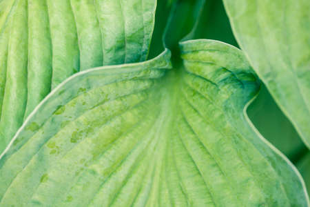 Abstract macro photo of a leaf - wavy natural shapes. Green summer background. Texture of green leaf.