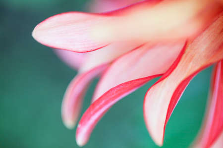 Abstract macro photo of a flower with shallow depth of field. Natural background.