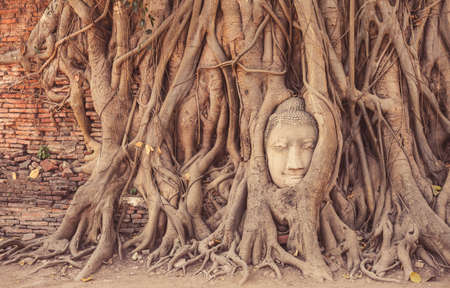 Head of Buddha statue in the tree roots at Wat Mahathat temple, Ayutthaya, Thailand