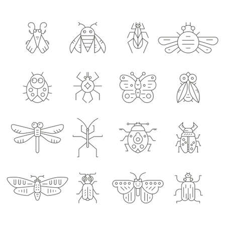 Collection of insects made in thin line vector style. Bug symbols, nature elements. Perfect illustration of insects for coloring book. Illustration