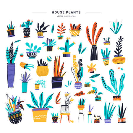 House plants color hand drawn illustrations set. Home decorations and interior design elements. House plants flat handdrawn cliparts. Flower pots sketch collection. Isolated scandinavian cartoon items Illustration