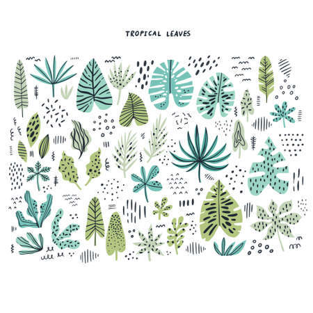 Tropical leaves hand drawn flat illustrations set. Exotic plants sketch cliparts collection. Green split leaves cartoon vector drawings. Botanical scandinavian style isolated design elements Çizim