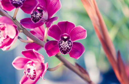 Phalaenopsis orchid macro Stock Photo