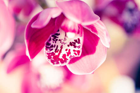 Orchid flower in greenhouse for postcard. Beautiful macro shot for backfrop or design. Phalaenopsis orchid. 写真素材