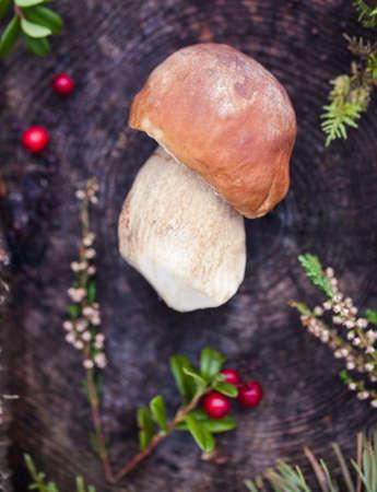Wild boletus mushroom growing in moss in forest in Latvia. Mushroom hunting seson. Autumn macro shot of white mushroom.