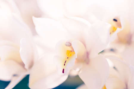 Macro photo of floral petal. Abstract shot with shallow depth of field.