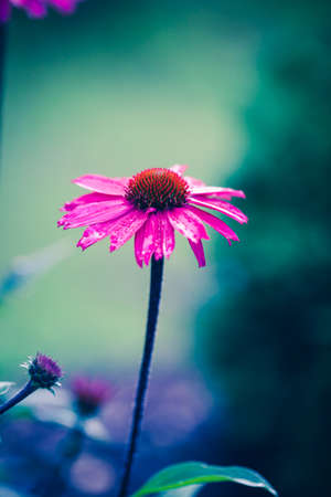 Flower macro shot, abstract photo of a flower with shallow depth of field. Beautiful natural background. Banco de Imagens