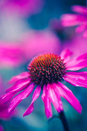 Flower macro shot, abstract photo of a flower with shallow depth of field. Beautiful natural background.