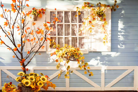 florida house: Marple tree with orange leaves in front of wooden house in Florida. Autumn time