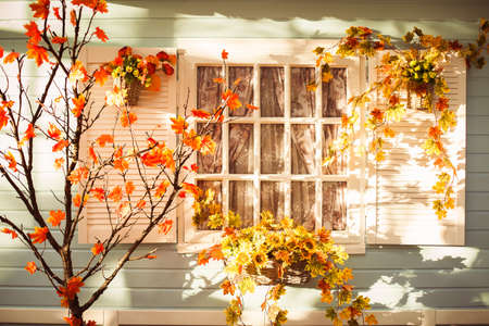 Evening patio in the autumn season. Sunset lights illuminate the maple tree with orange leaves, basket with flowers and blue colored house wall.