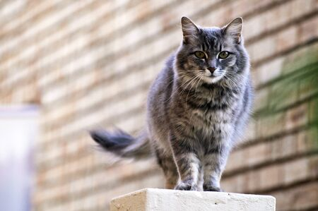 Pretty grey cat standing on a wall