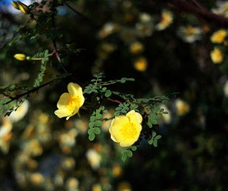 nature photo: Flower