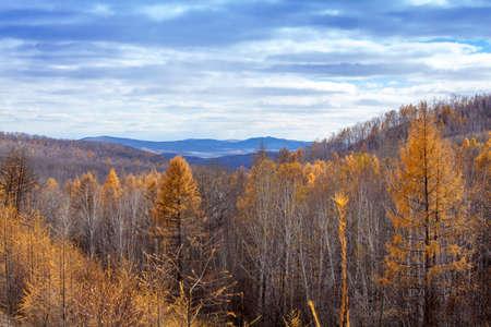 inner mongolia: China Inner Mongolia fall color