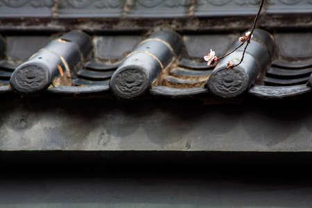 adn: muralla china melocotón adn