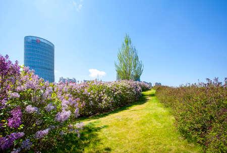 clove plant: lilac flowers