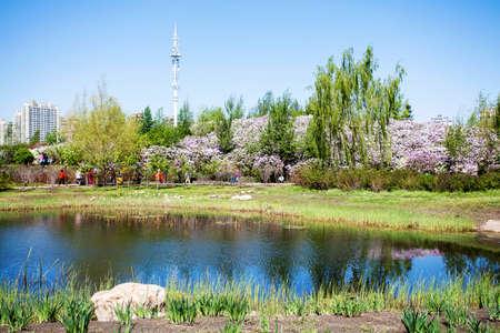 wetland: Lilac urban wetland