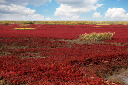 wetlands: Red beach wetlands in Panjin