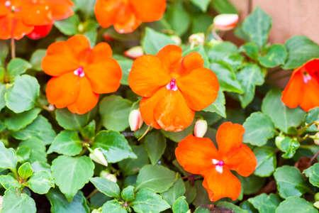 blooming: flower blooming