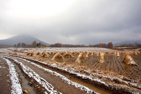 muddy: Paddy fields country roads muddy Stock Photo