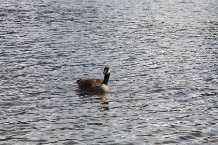 Swan Lake Imagens - 84350363