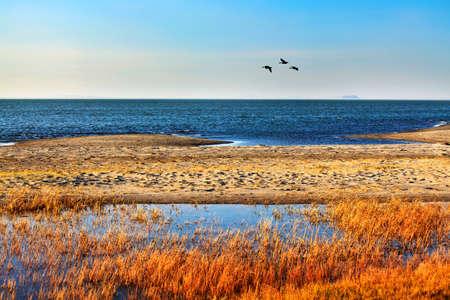 내몽고 대리 호수 가을 호수 늪 크레인 스톡 콘텐츠