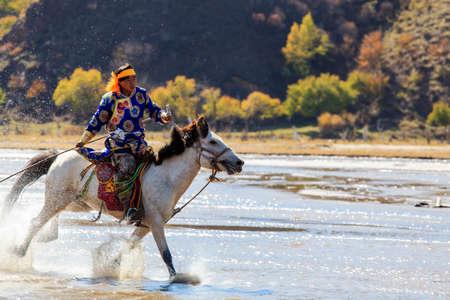 Inner Mongolia Wrangler horse Editorial