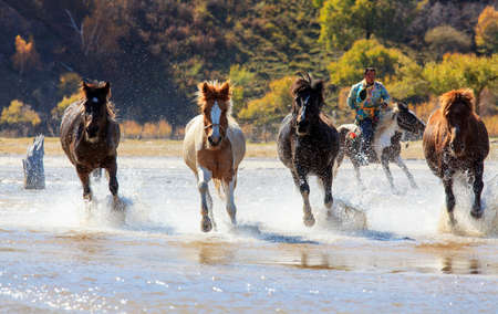 Horse riding horse horse horse splashed water in Mongolia grassland tourism project Wrangler permanent day too