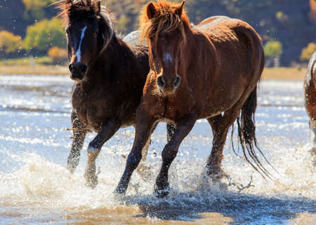 Horse riding horse horse horse splashed water in Mongolia grassland tourism project features permanent day too