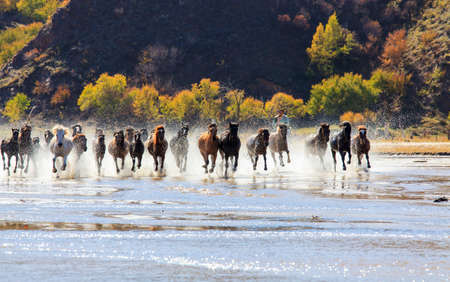 Horse riding horse horse horse splashed water in Mongolia grassland tourism project permanent day too