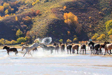 The horse kicks the horse riding horse horse horse splashed water in Mongolia Imagens