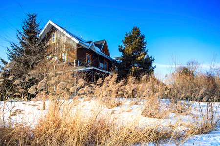 Winter reeds in villas and white snow