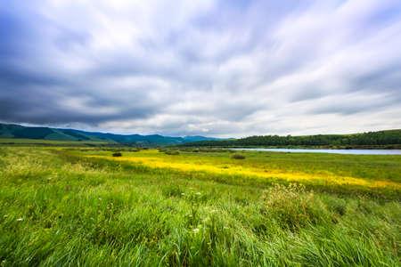 Summer grassland flowers and clouds