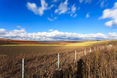 Autumn grassland pasture white birch blue sky and white clouds