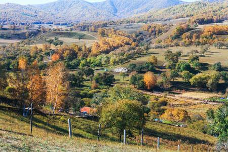 Autumn grassland white birch Village