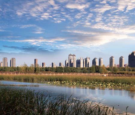Urban wetland scene