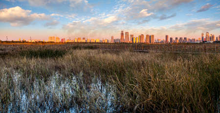 Urban city with wetland scene Stockfoto