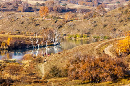 River and birch tree, Hamaba autumn scenery