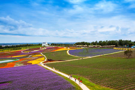Botanical Garden with Lavender field