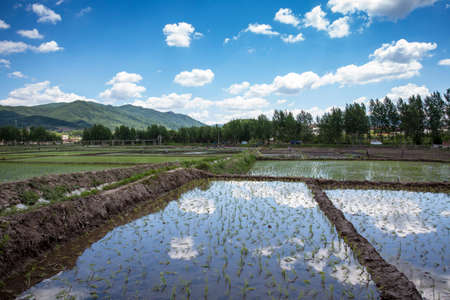 Northeast rice paddy field Stockfoto - 124058170